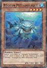 Requin Métabolique