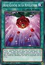 Rose-Cloche de la Révélation