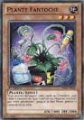 Plante Fantoche